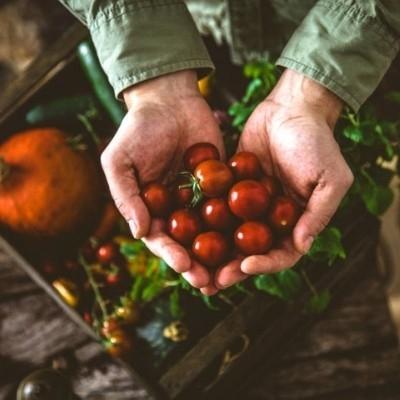 _Sonoma Epicurean - Tomatoes